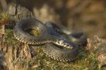 fobia dei serpenti e dei ragni