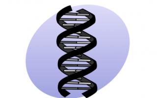 Timidezza e predisposizione genetica