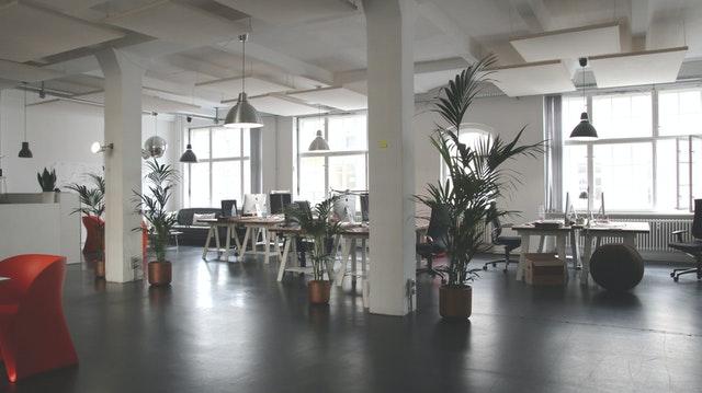 Le piante in ufficio migliorano la salute mentale