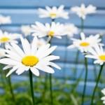 Soffri della sindrome di primavera? Test