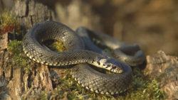 Fobia dei serpenti e dei ragni: come si origina?